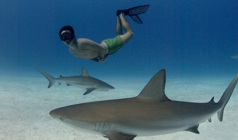 Fra filmen Sharkwater